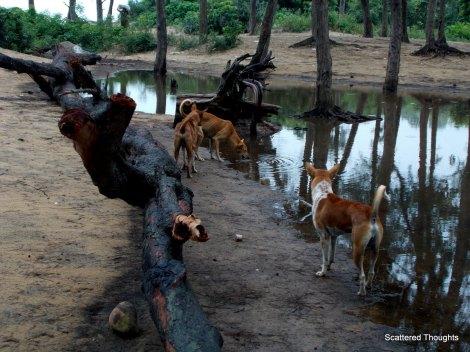 1-ChaNdipur 073