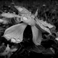 Nature in Monochrome