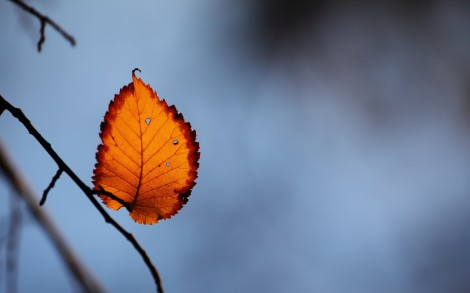 autumn-free-wallpaper-last-autumn-leaf_2560x1600_93130