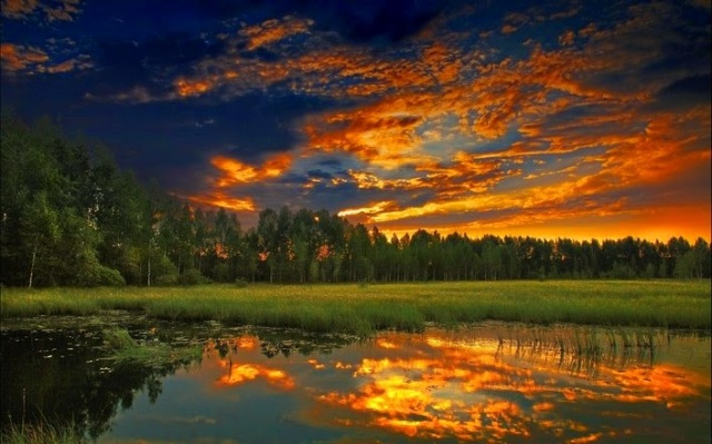 forest-pond-at-dusk-263-706