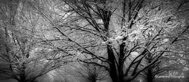 1-snow-tree-fence-1024x676