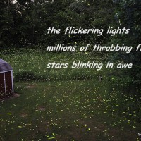 Haiga: Light