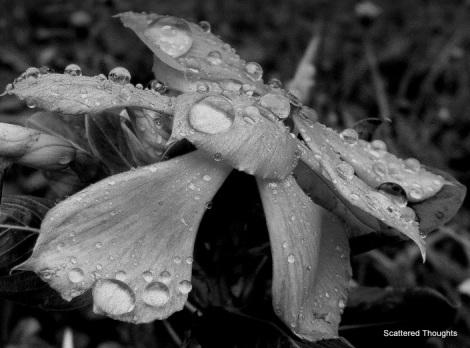 Rain and petrichor
