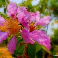 Haiku: Flower