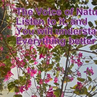 Voice of Nature, Are You Listening?