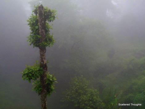 1-Darjeeling1