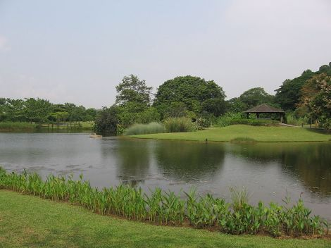 800px-singapore_botanic_gardens_eco-lake_9_sep_06