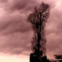 Tree Love #2