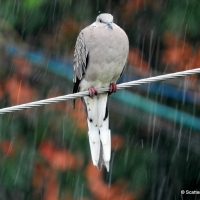 Of Birds and Rain