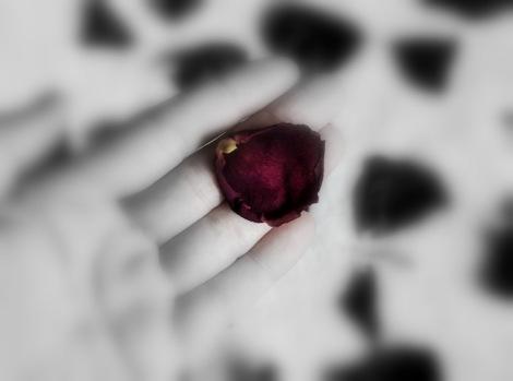 1-rose petal